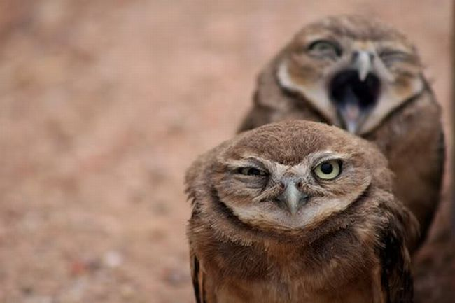 Love the owls